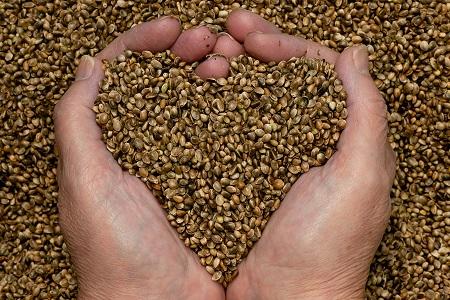 6 вида полезни семена